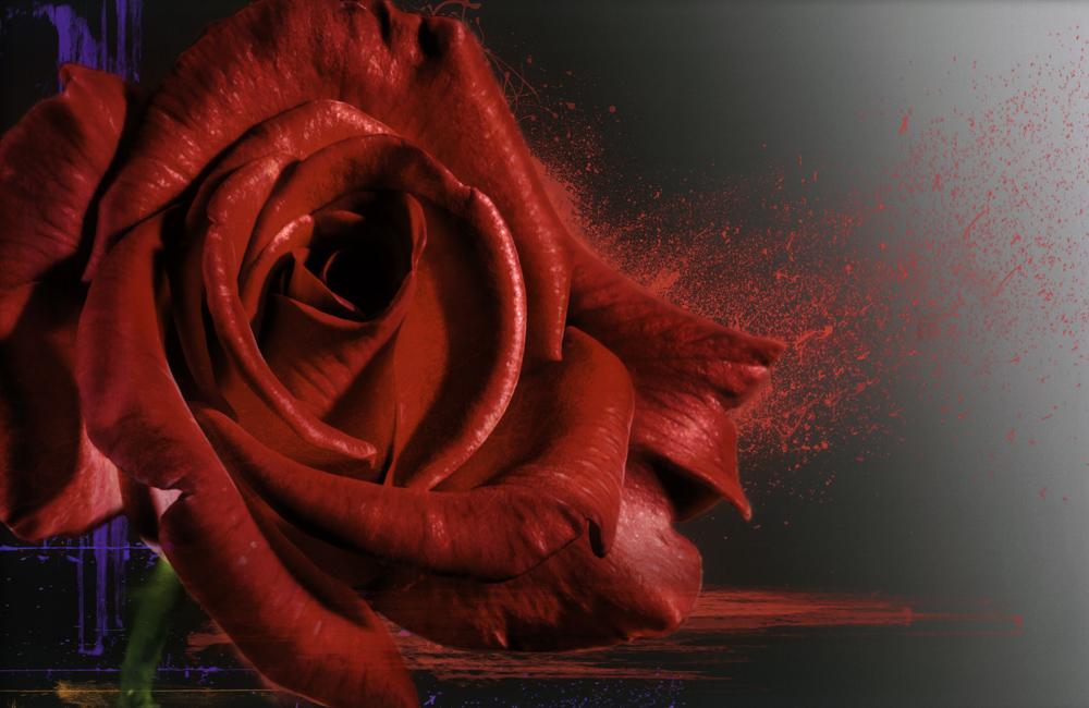 Yoko Ono Rose