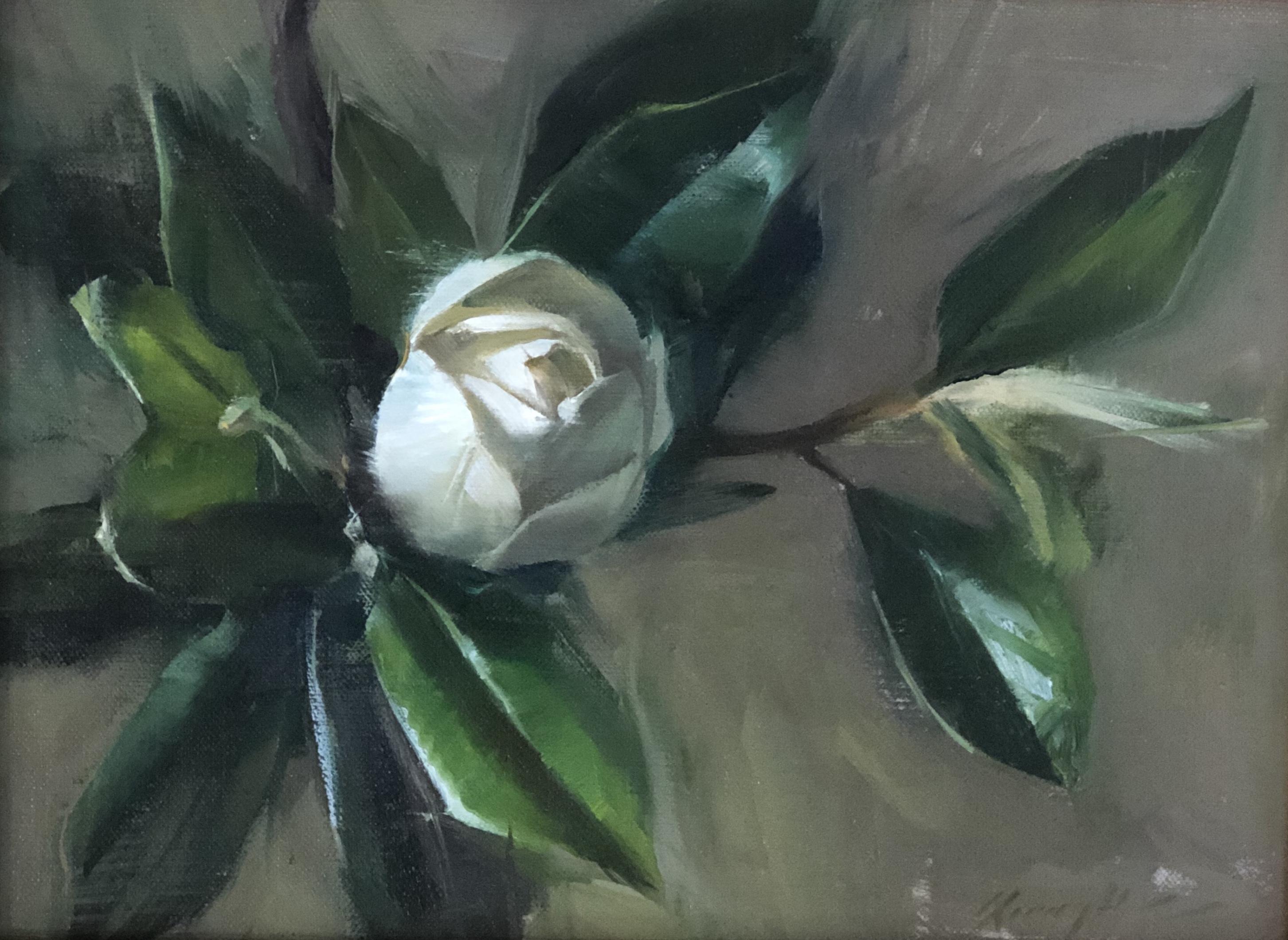Budding Magnolia