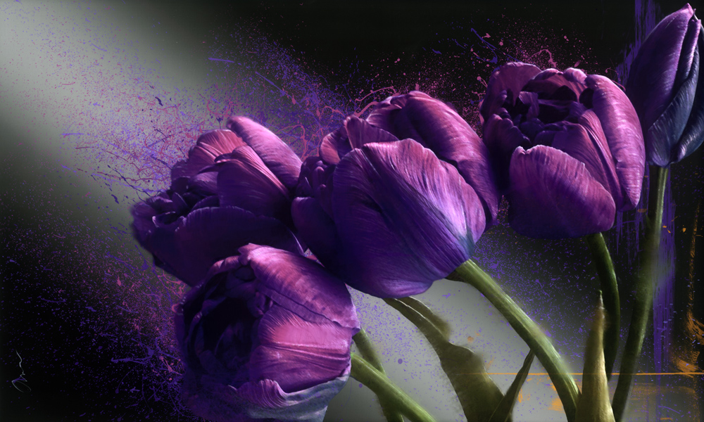 Robert Mapplethorpe Tribute Series: Tulips