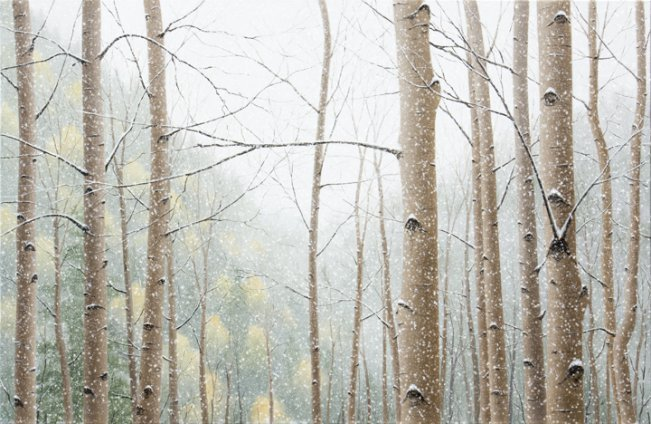 Snow Falling on Aspens