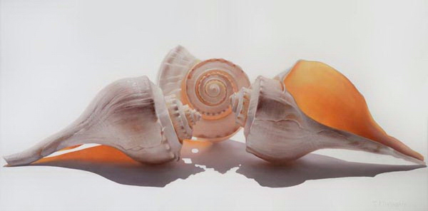 Sea Shell Trio on White