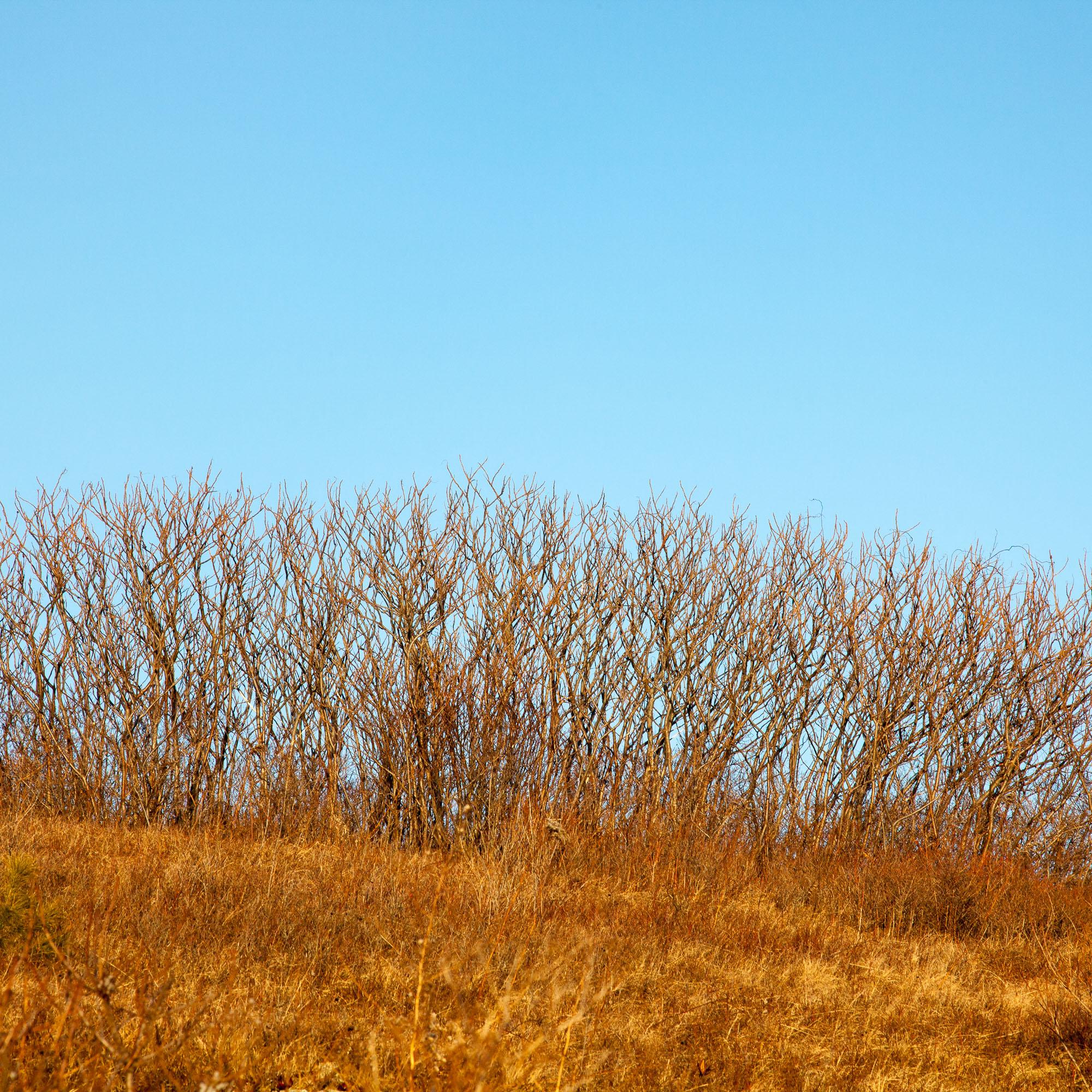 Pre-Liminal III - Beech Hill