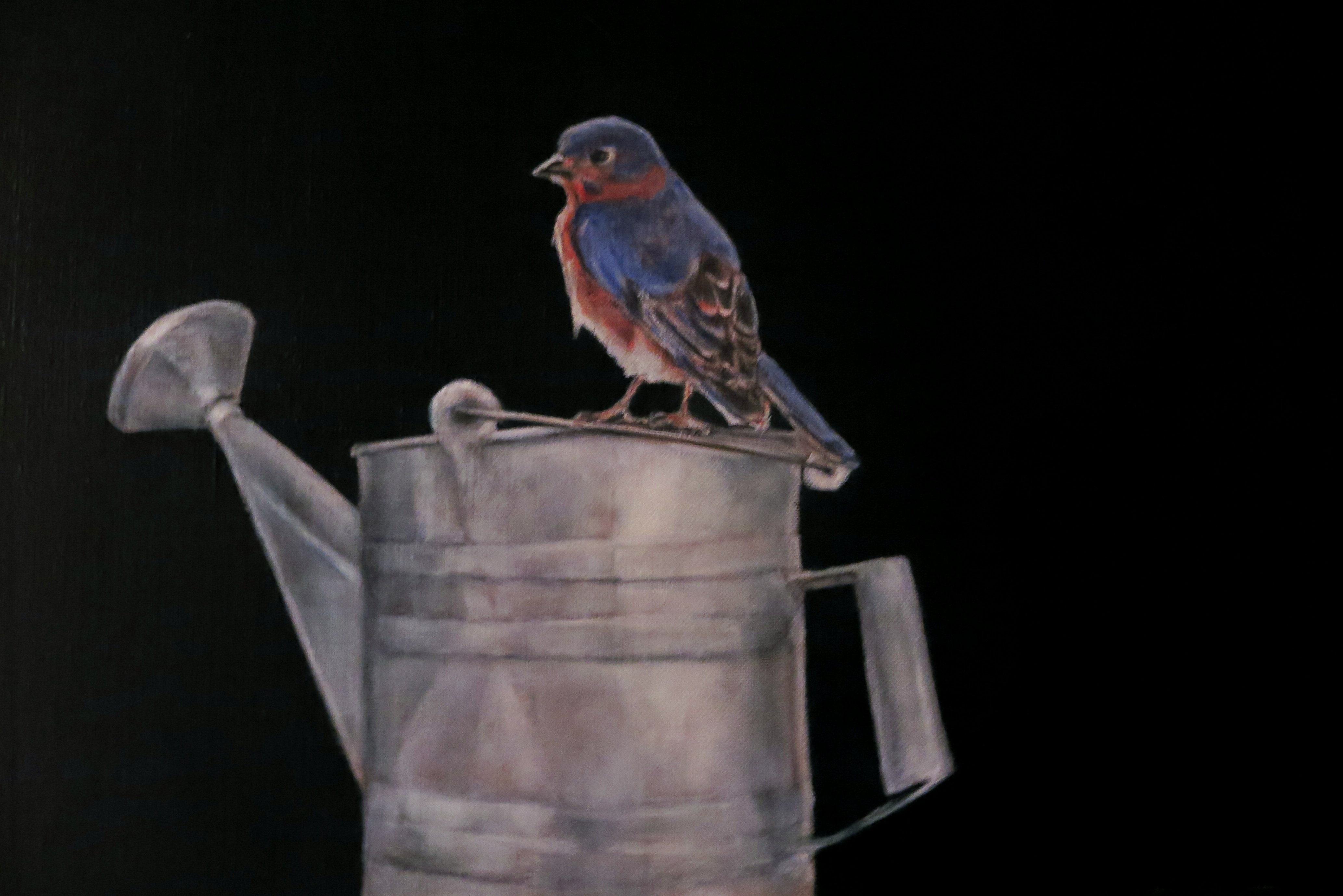 A Bluebird with Sprinkling Can