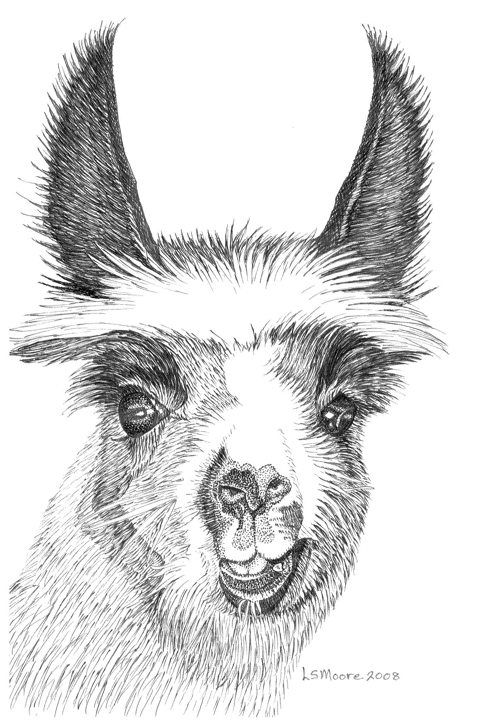 Llama Babe