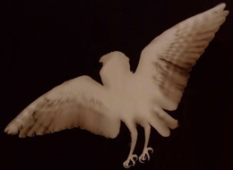 """Barn Owl"" by Kate Breakey"