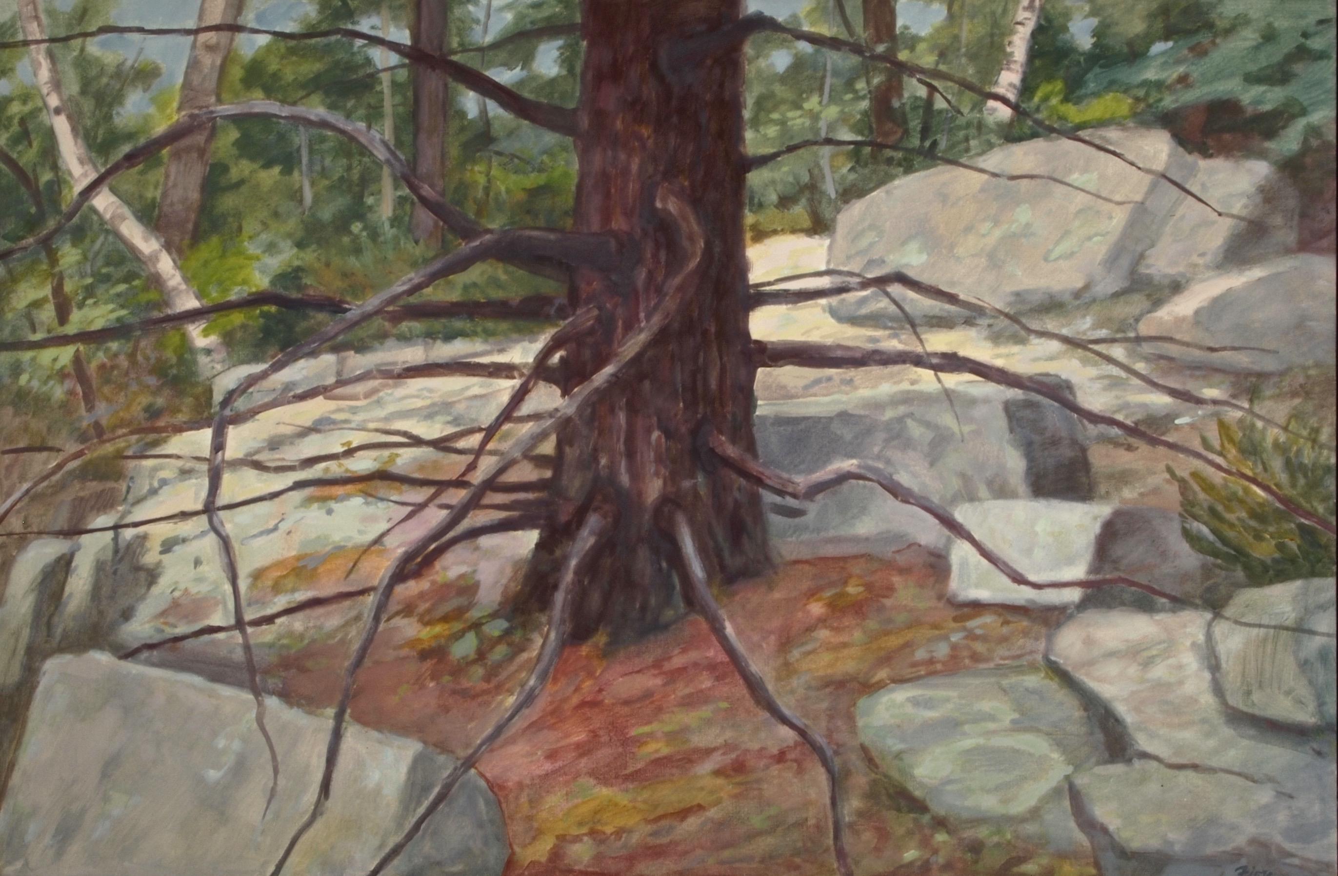 Pine and Rocks