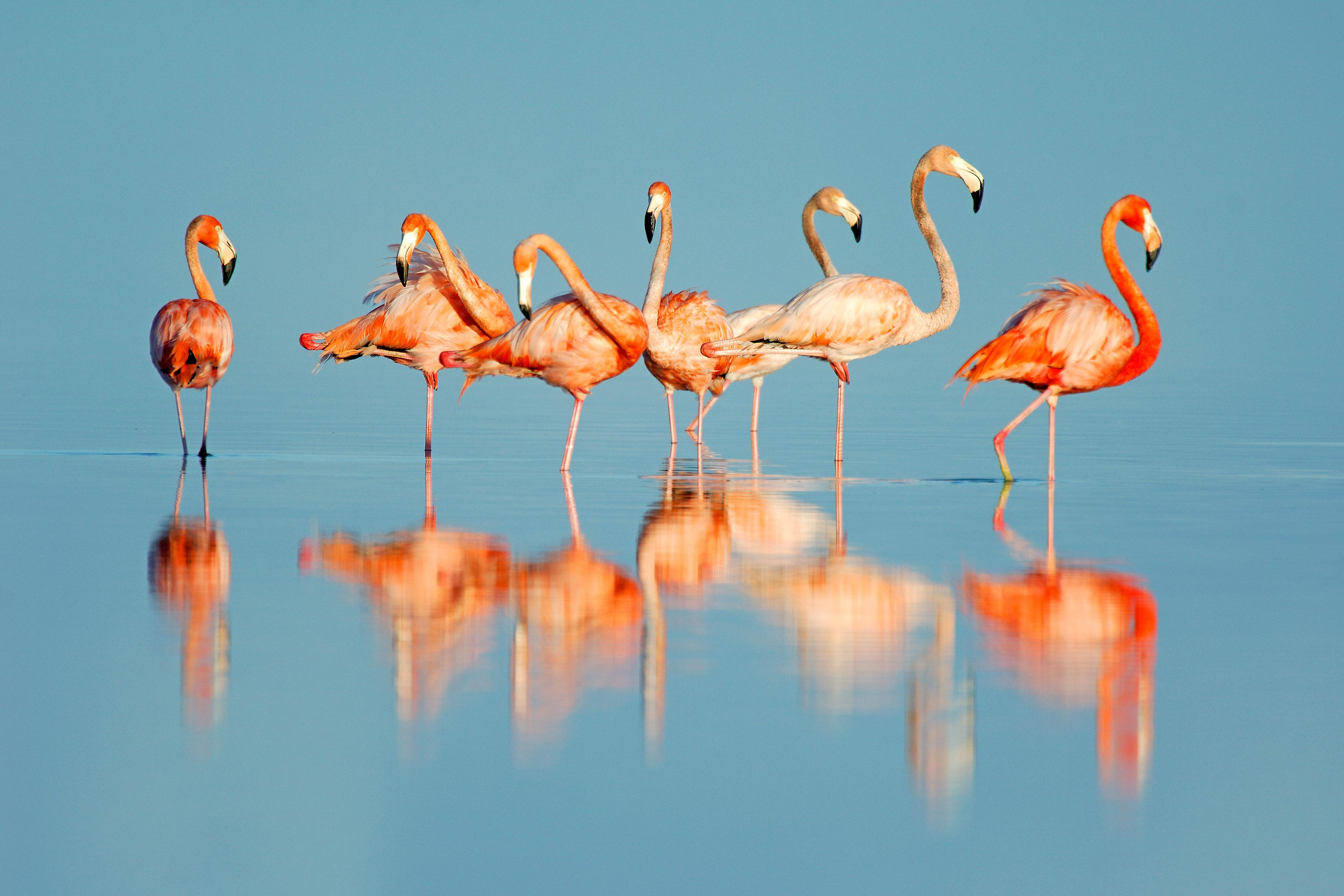 Фламинго Обои На Рабочий Стол