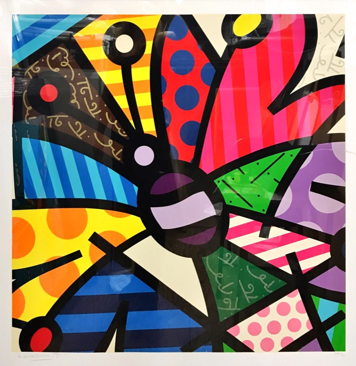 Rothchild Butterfly