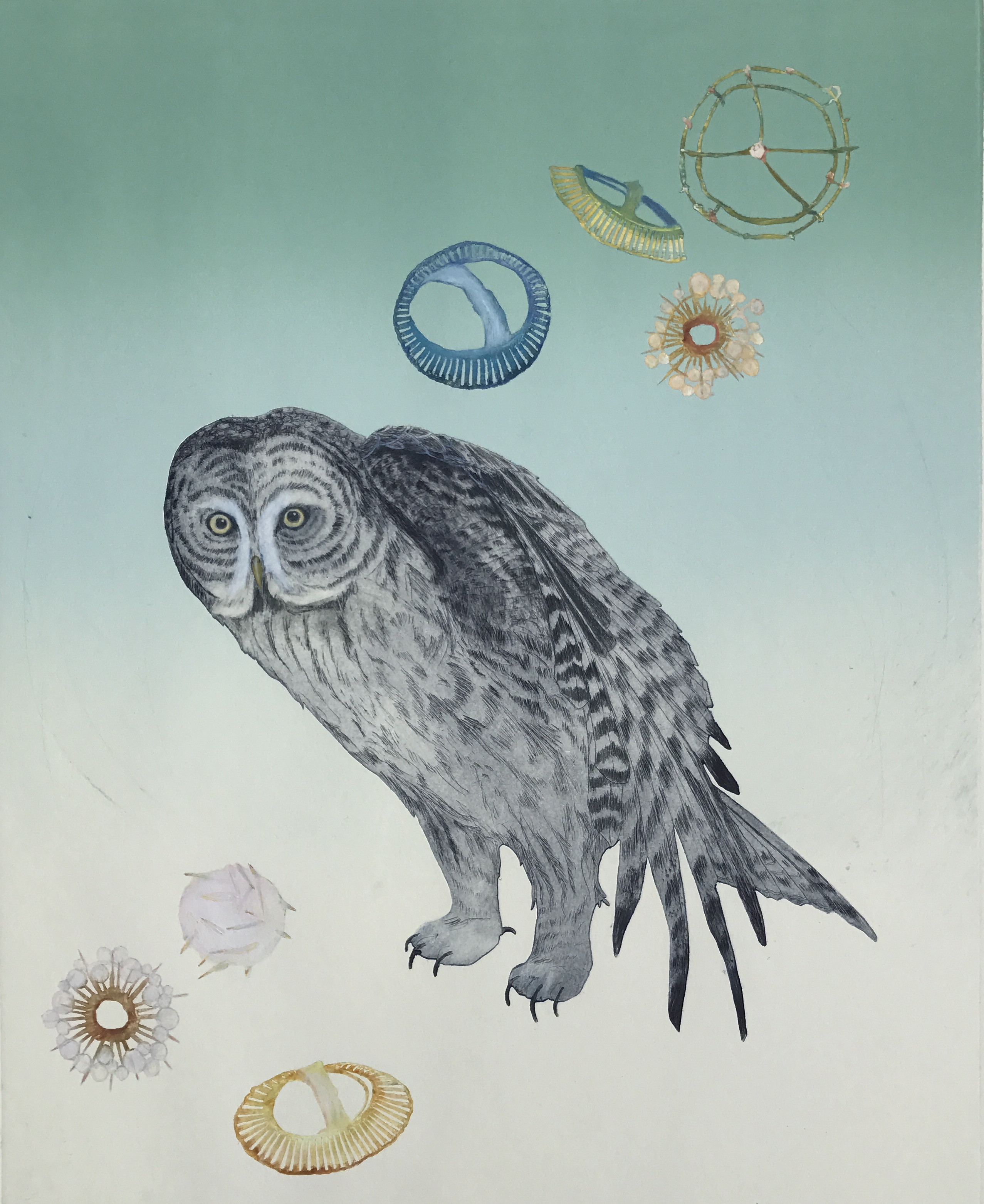 Obstacles Exposed (Gray Owl)
