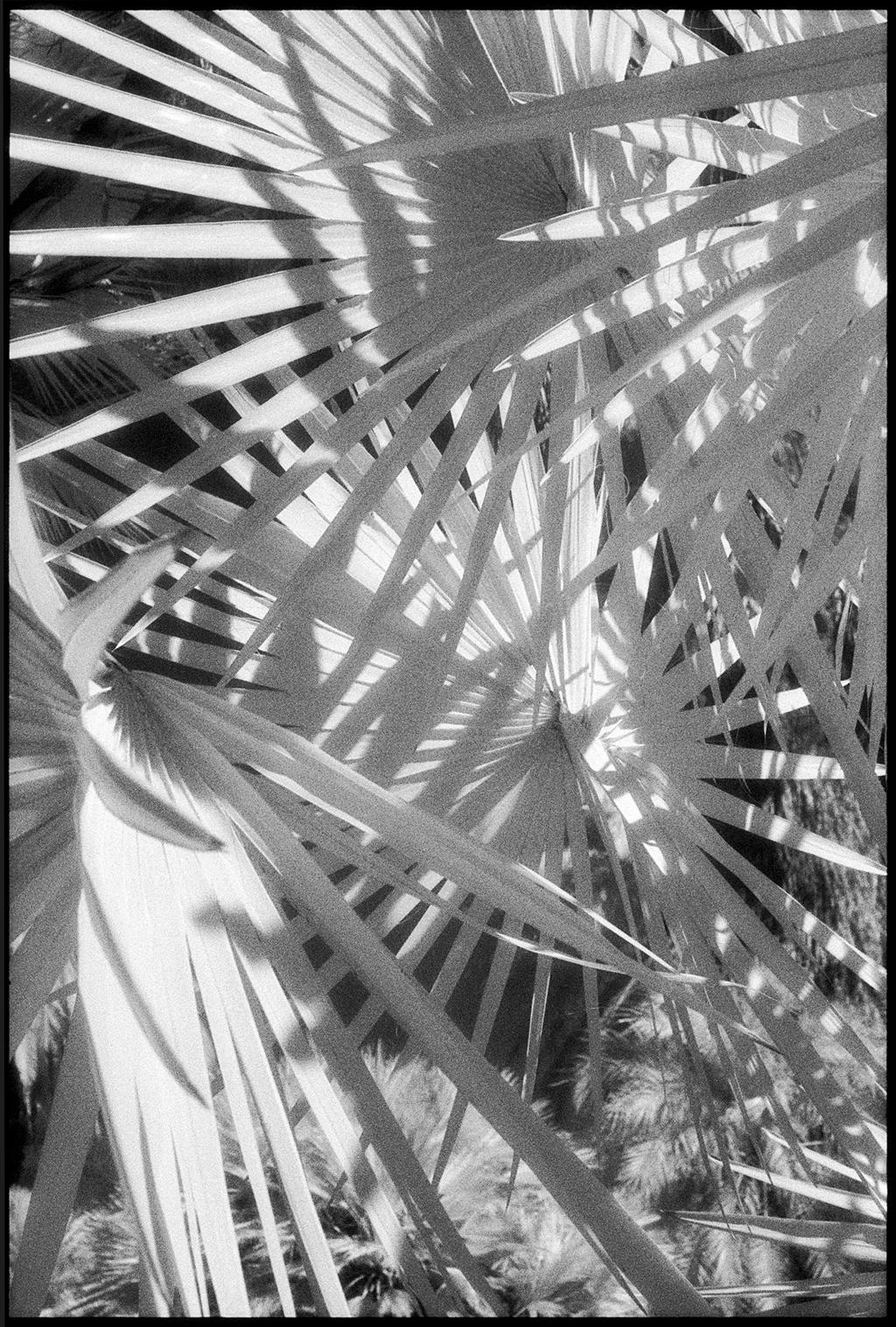 Huntington Gardens XLIV by Edward C. Alfano