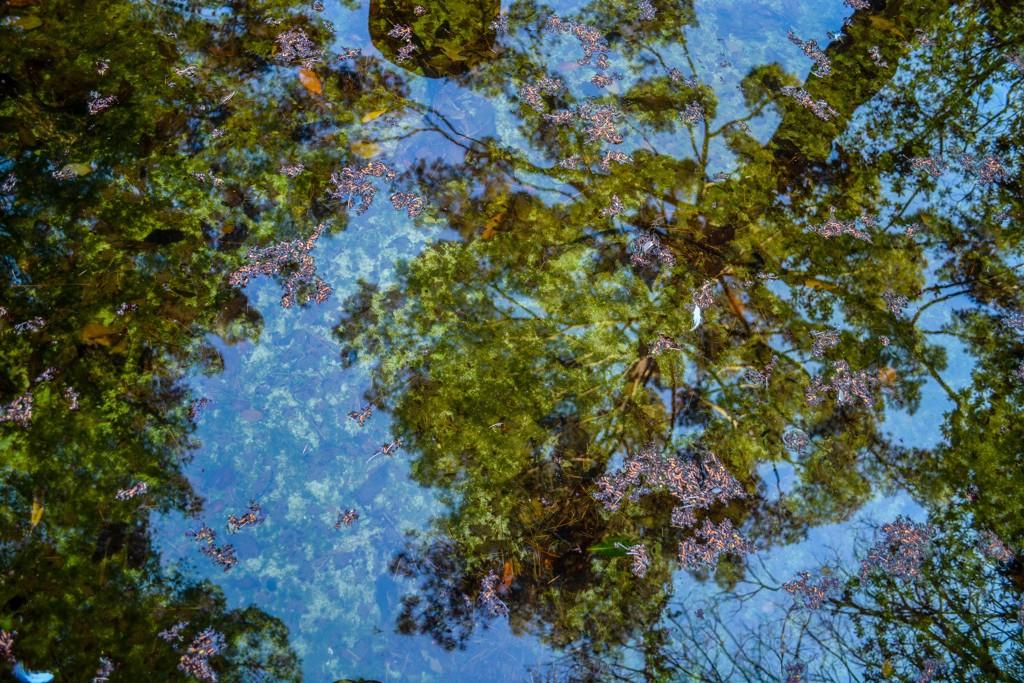 Reflections No. 5 by Rachel Berkowitz
