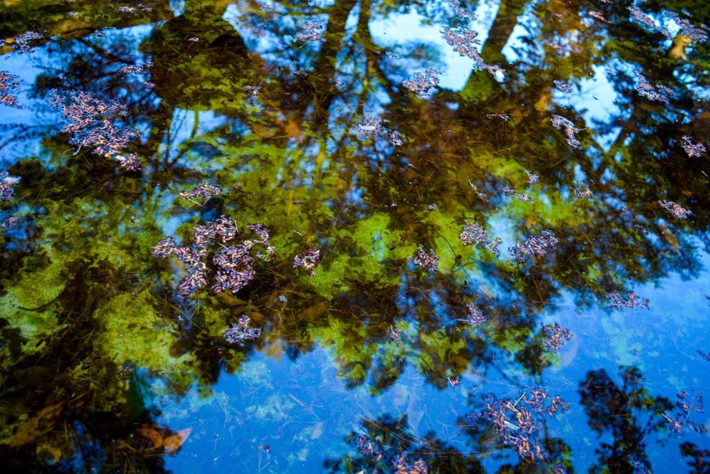 Reflections No. 1 by Rachel Berkowitz