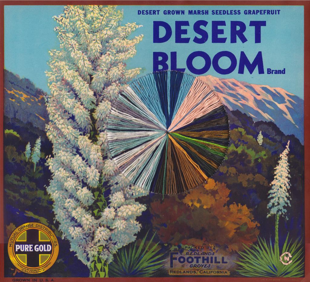 Desert Bloom by Natalie Ciccoricco