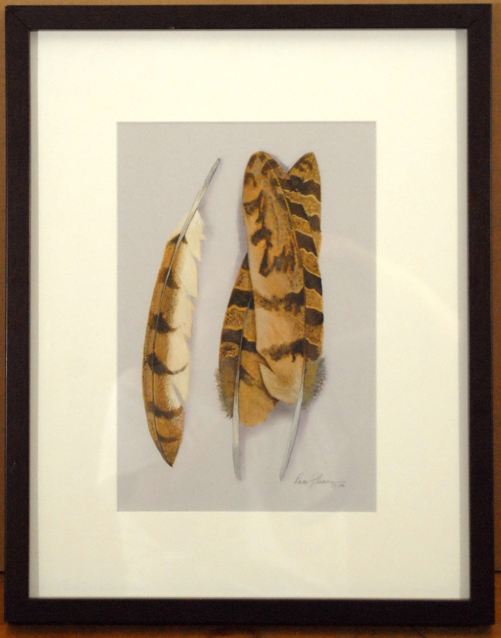 Owl Feathers by Pamela Gleave