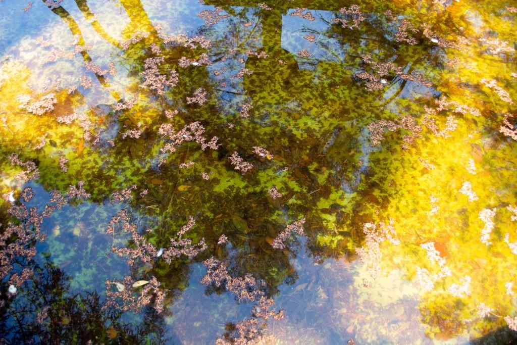 Reflections No. 3 by Rachel Berkowitz