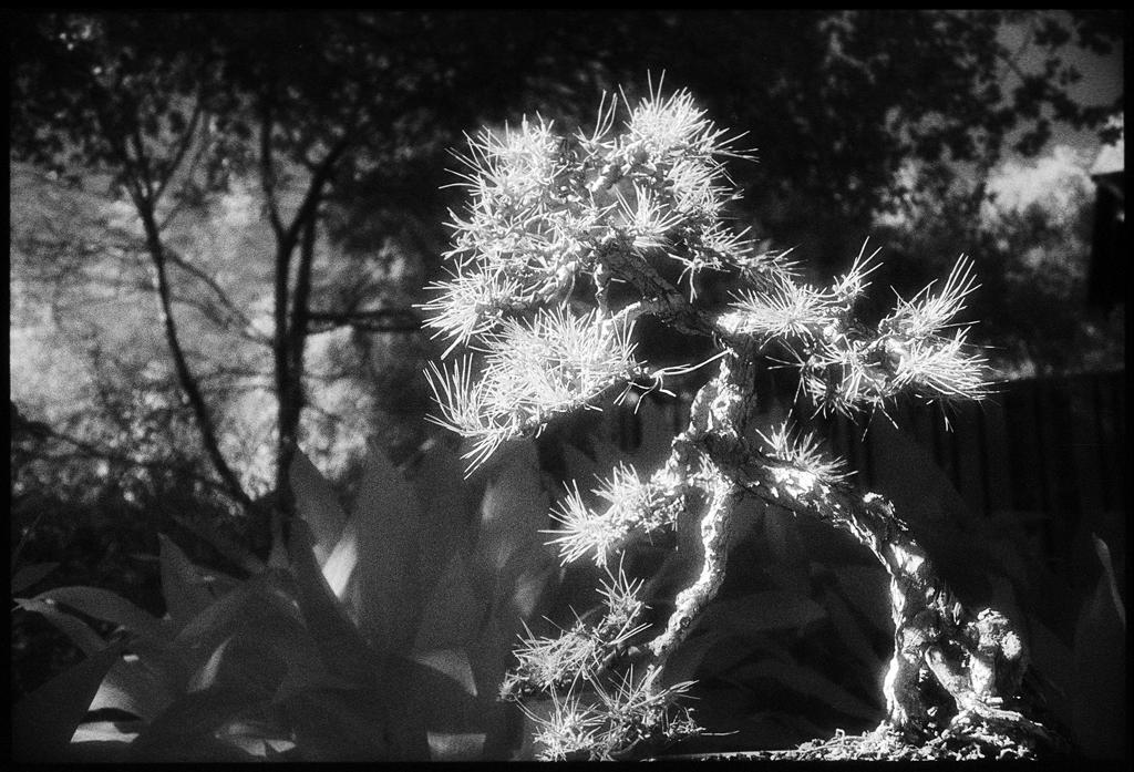 Huntington Gardens XXXVI by Edward C. Alfano