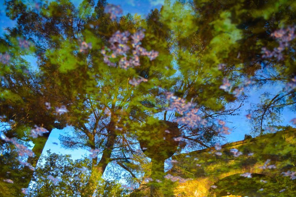 Reflections No. 2 by Rachel Berkowitz