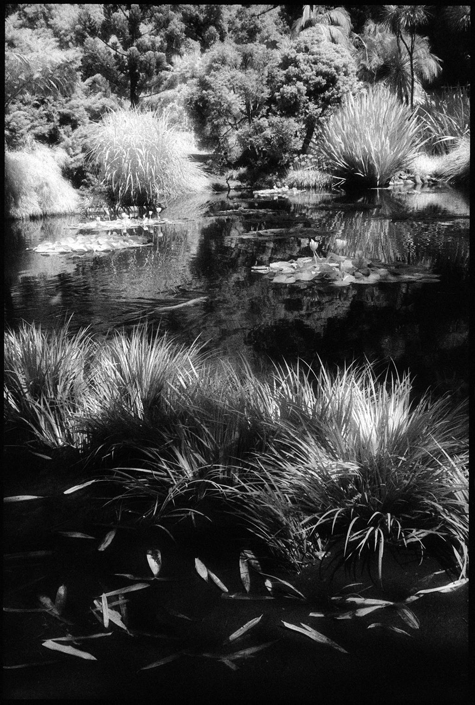 Huntington Gardens XII by Edward C. Alfano