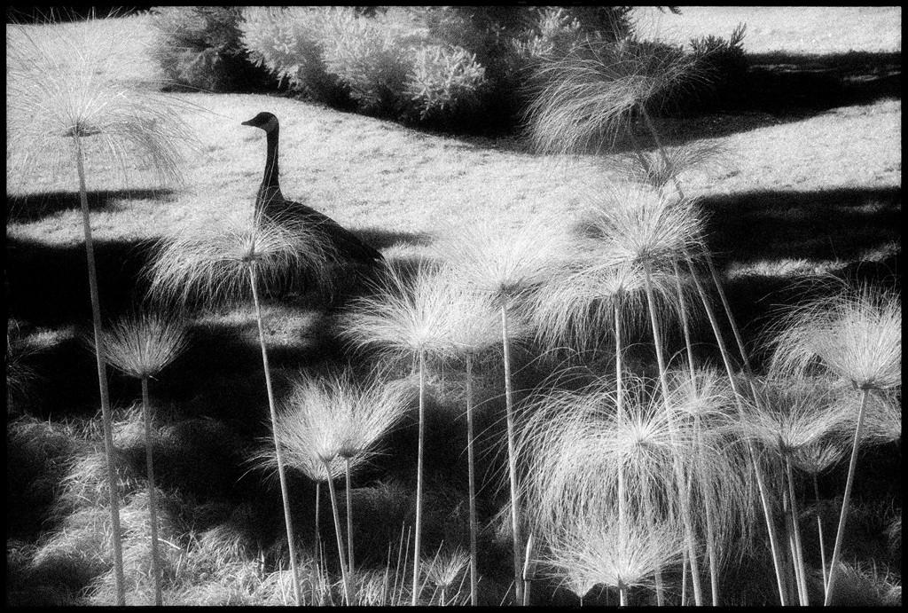 Huntington Gardens XXXII by Edward C. Alfano