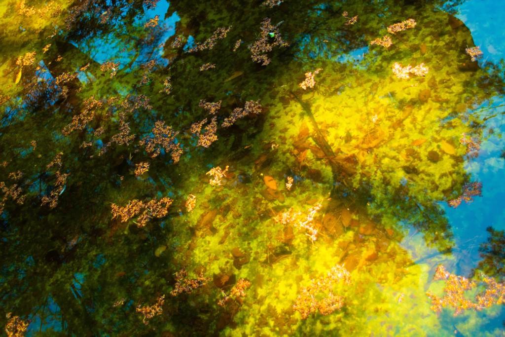 Reflections No. 4 by Rachel Berkowitz