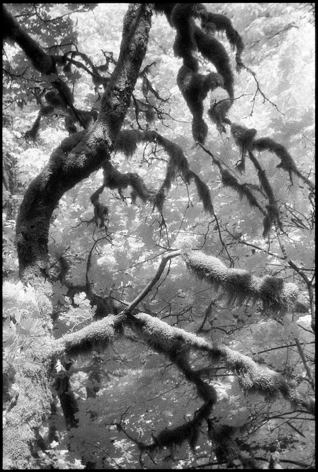 Multnomah Falls II by Edward C. Alfano