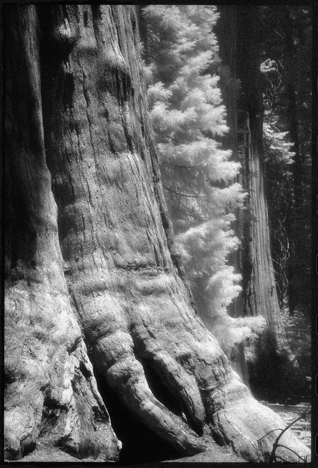 Sequoia National Forest, CA by Edward C. Alfano