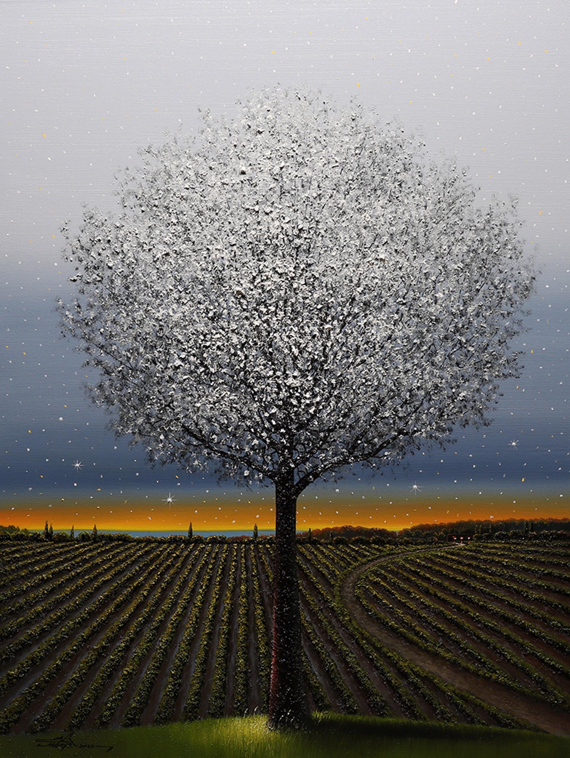 Twinkle Twinkle by Mario Jung