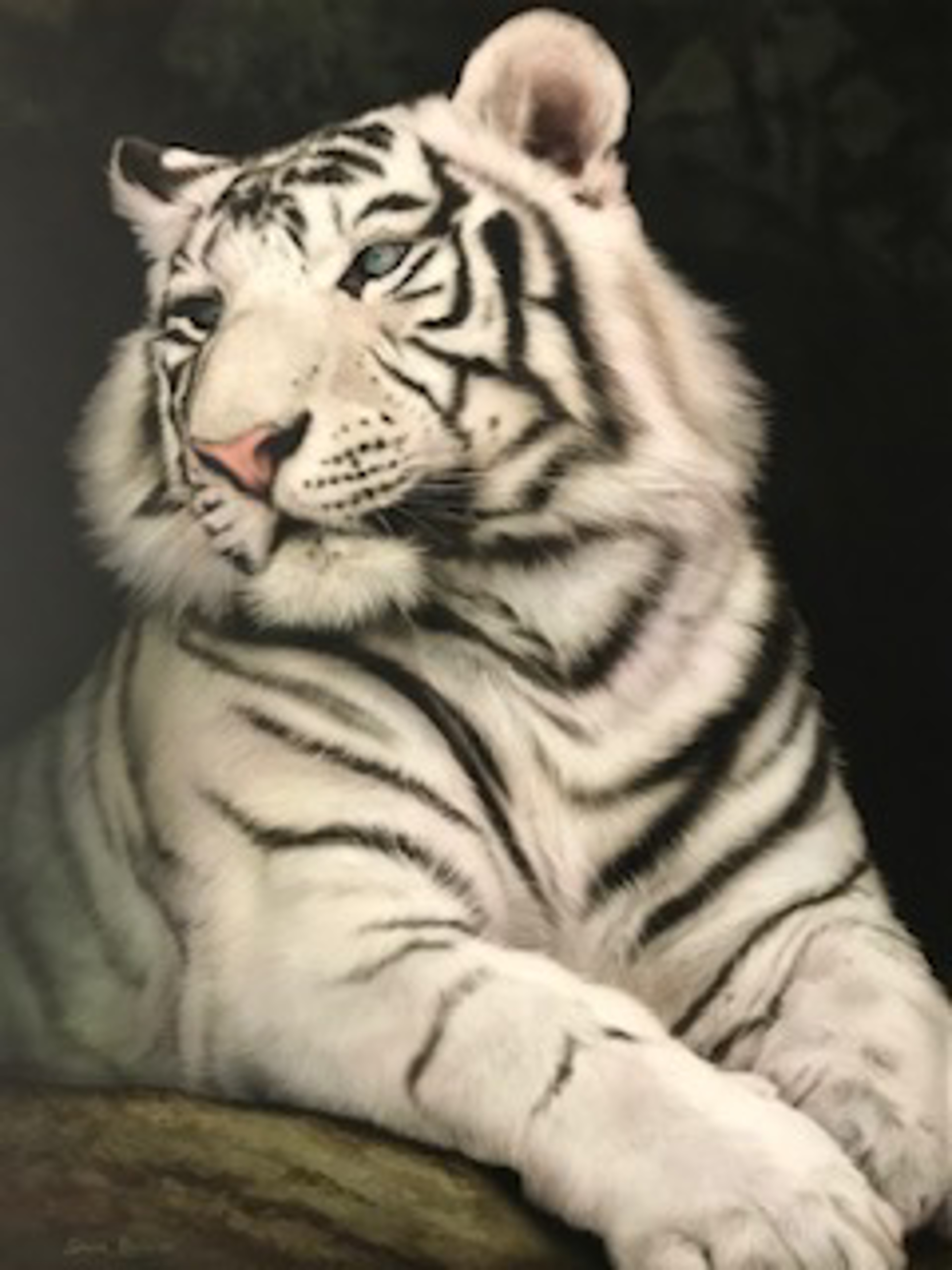 White Tiger II by Silvia Belviso