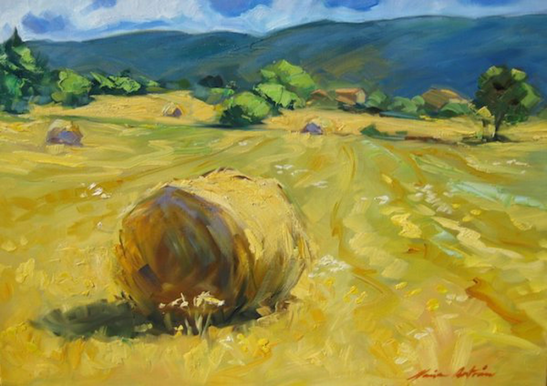 Haute Provence Hayrolls by Maria Bertrán