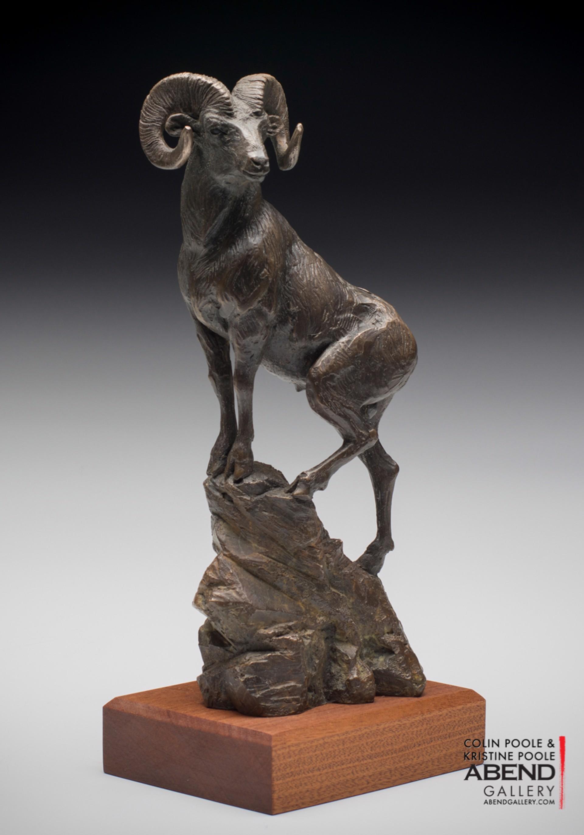 Bighorn Sheep by Colin & Kristine Poole