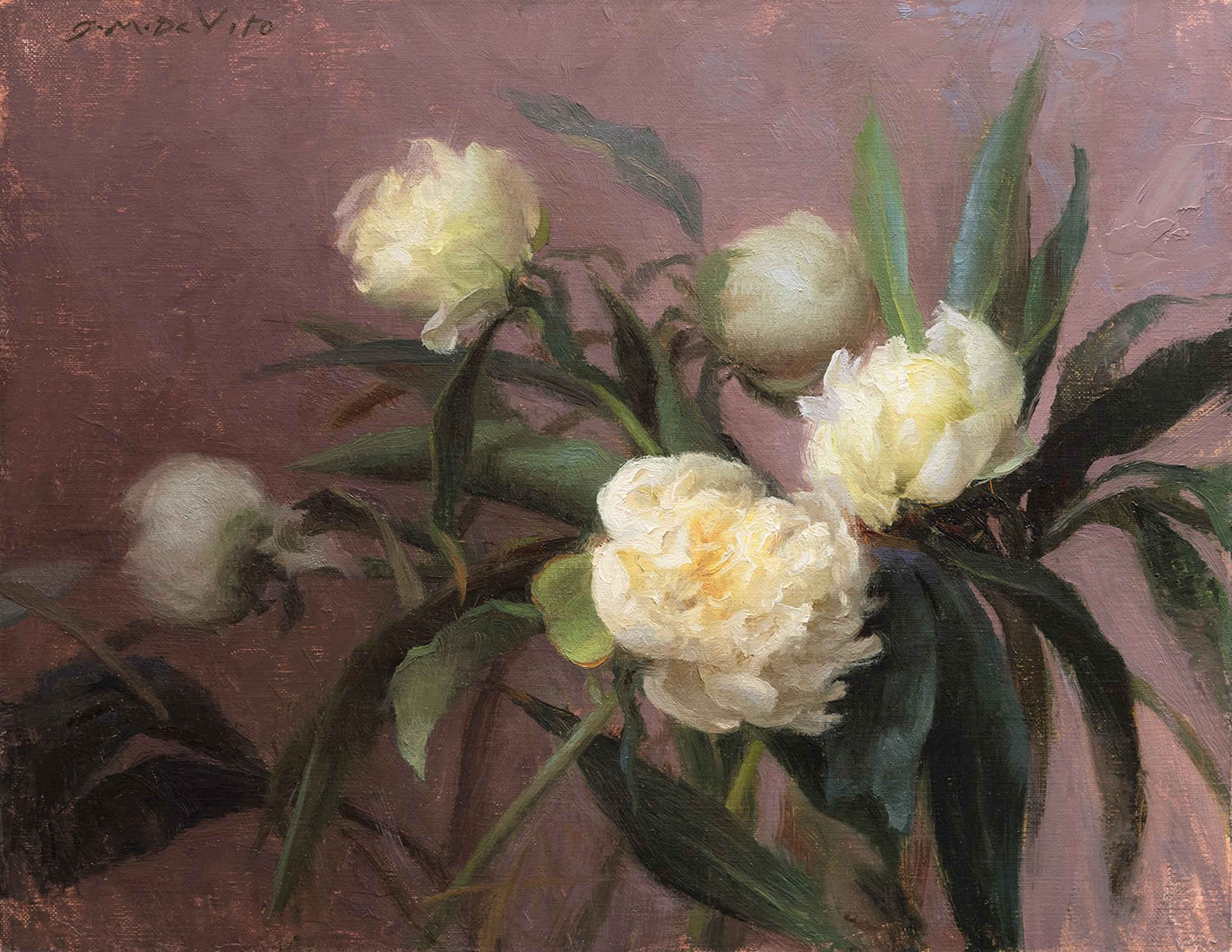Winter Peonies by Grace DeVito