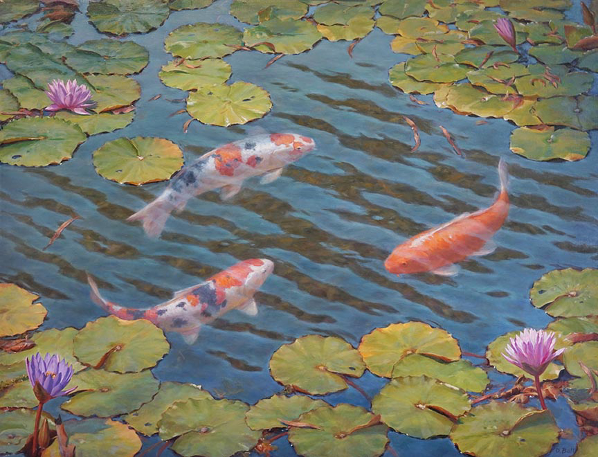 Koi by Douglas Ball
