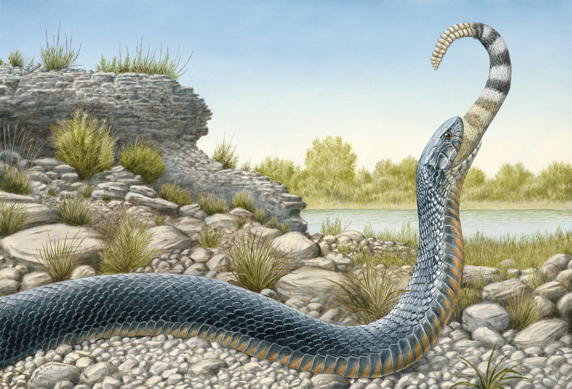Texas Indigo Snake by William B. Montgomery