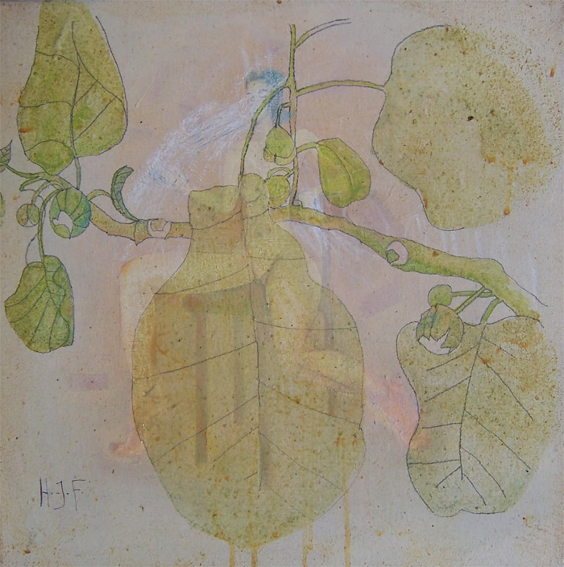 Kiwi 2 by Hans Joerg Fuerpass