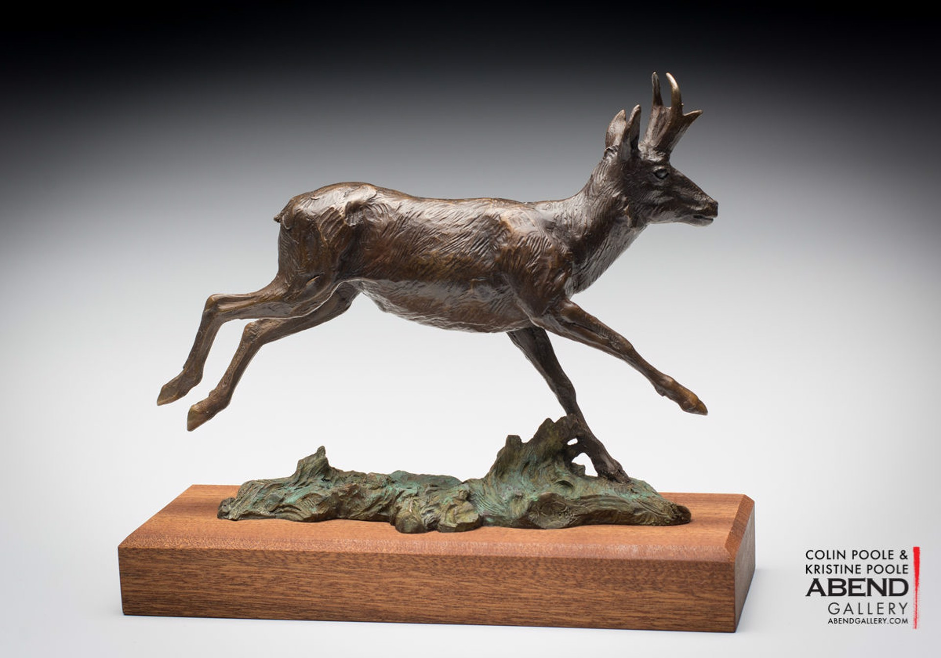 Pronghorn Antelope by Colin & Kristine Poole