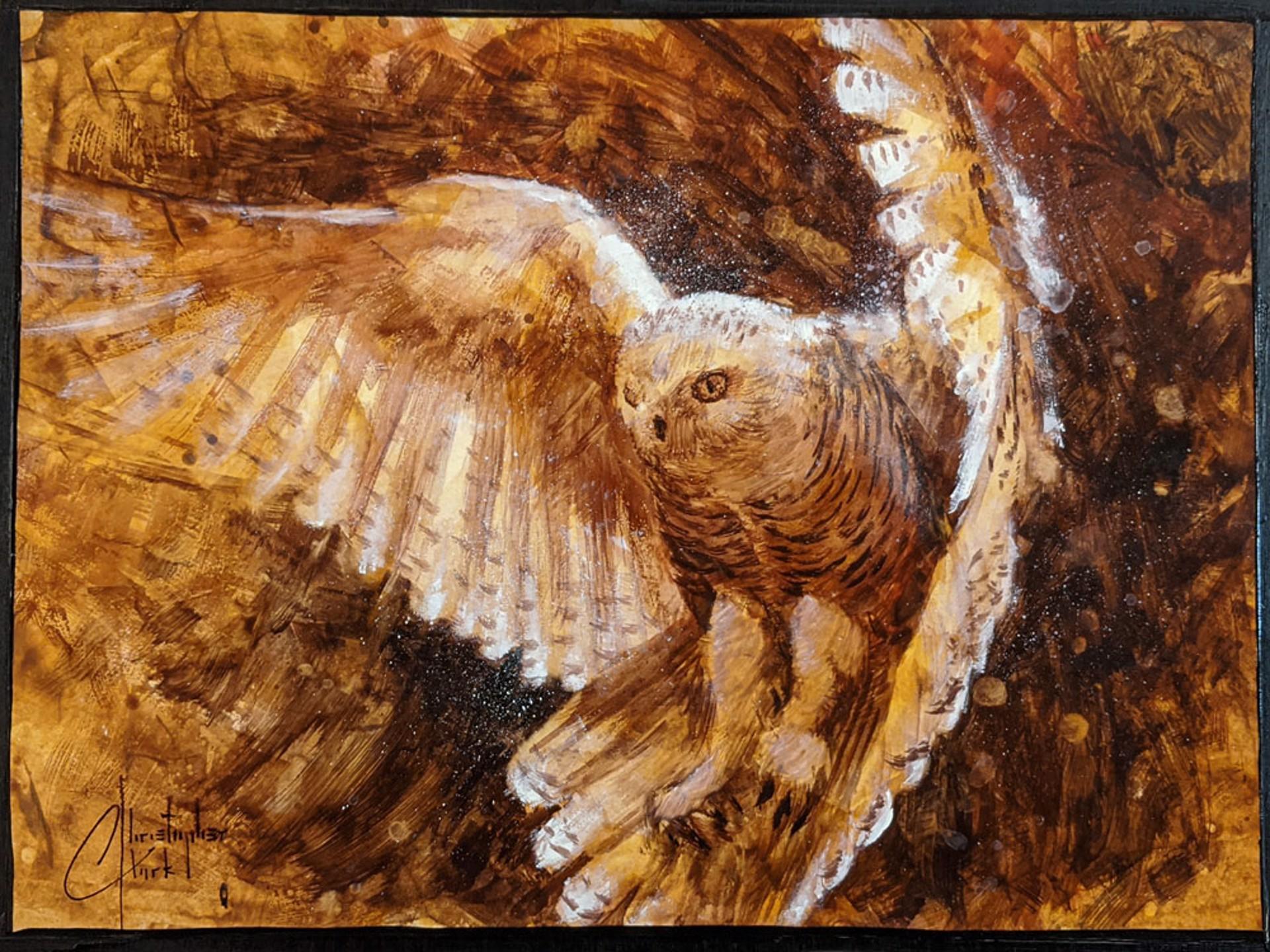 Barn Owl by Christopher Clark