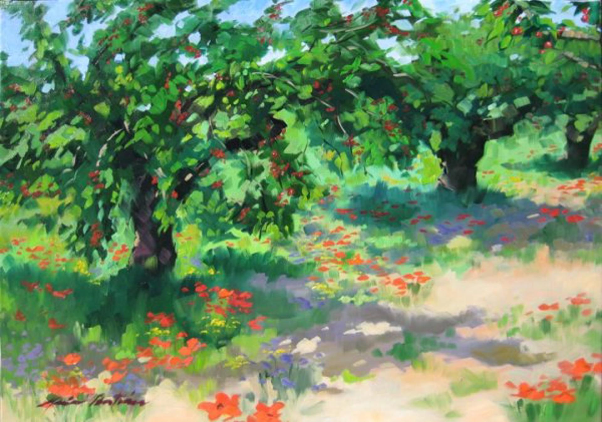 Wild Cherry Trees, Provence by Maria Bertrán