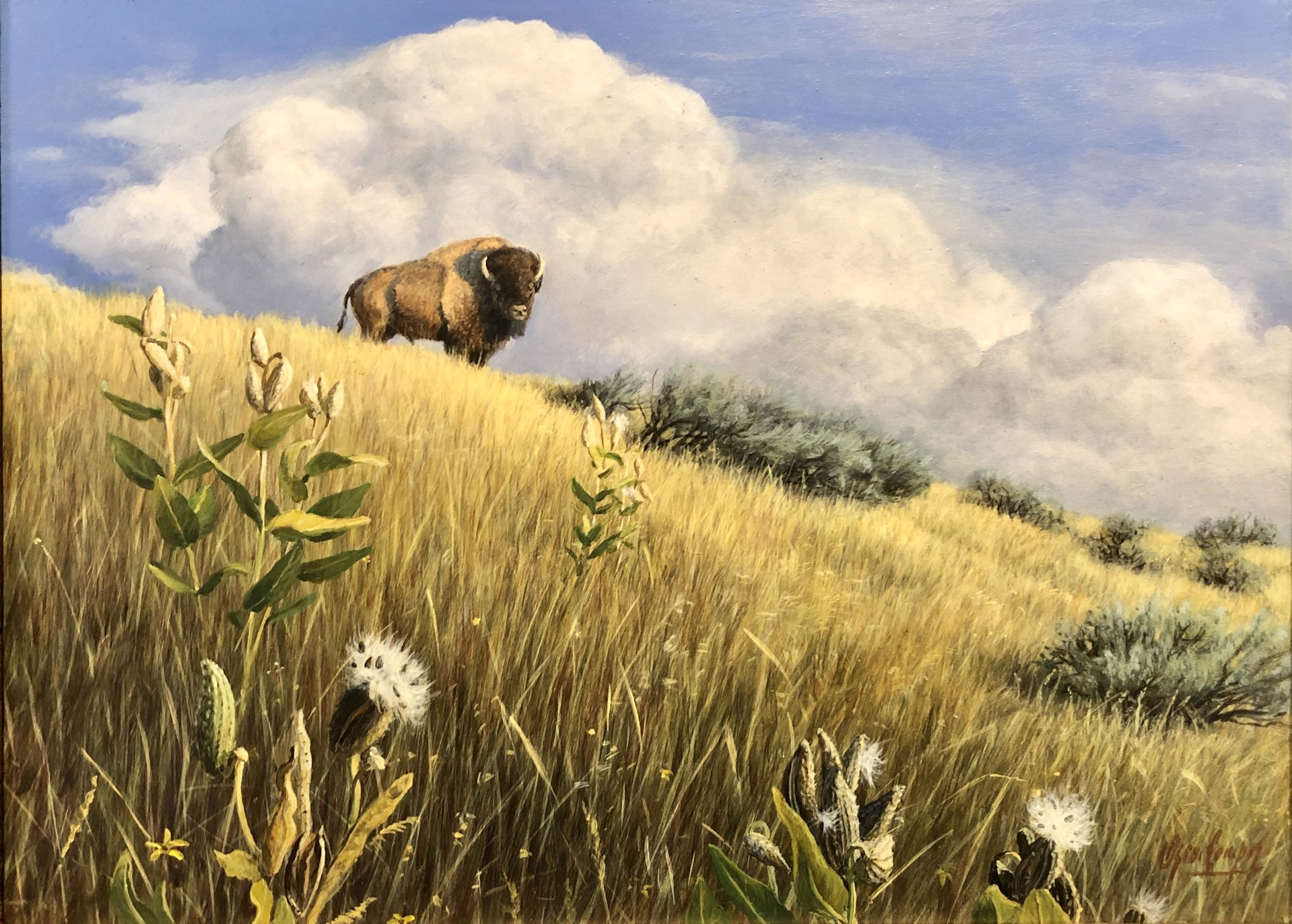 King of the Prairie by Oscar Campos