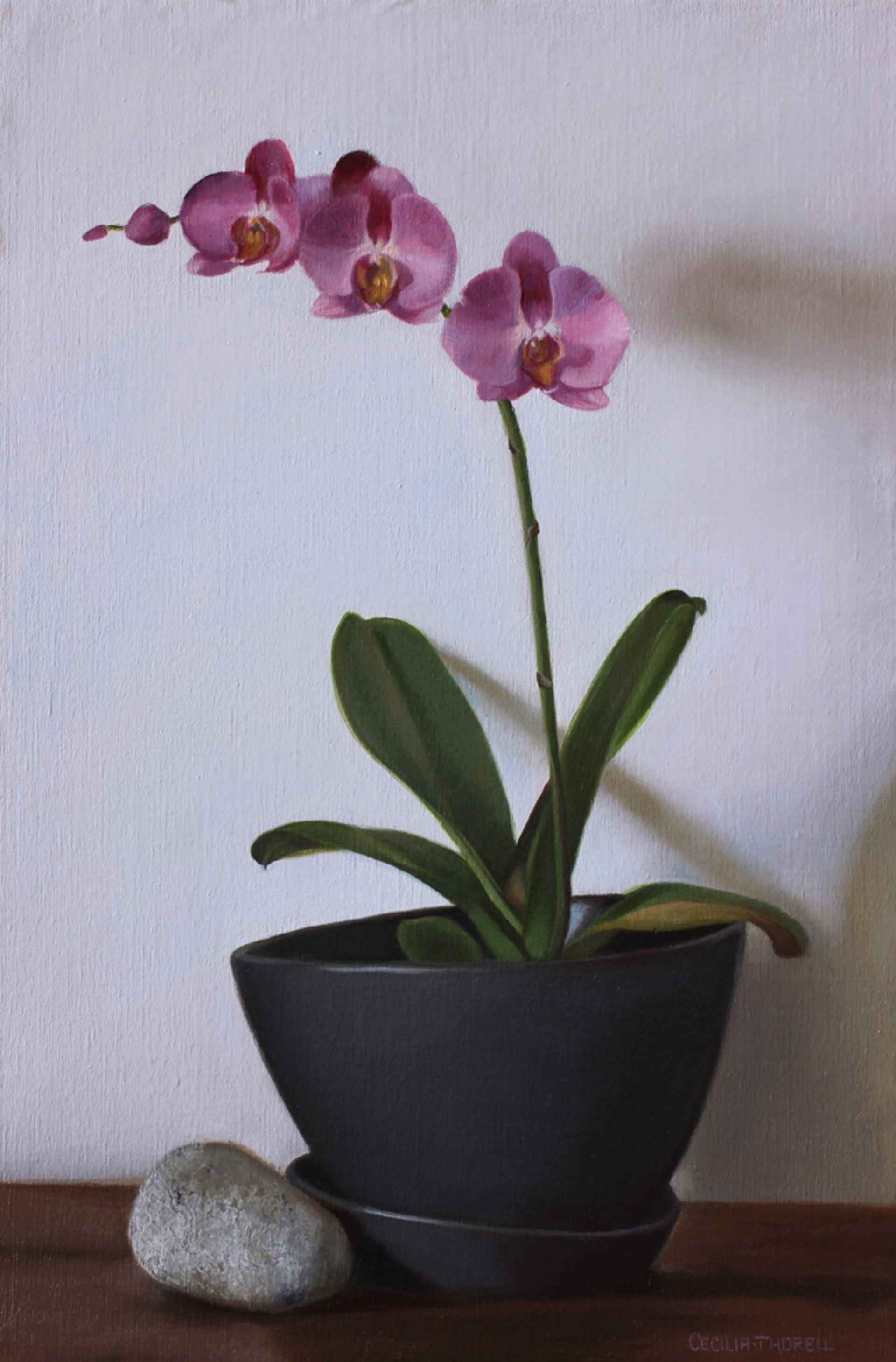 Pink Orchids by Cecilia Thorell