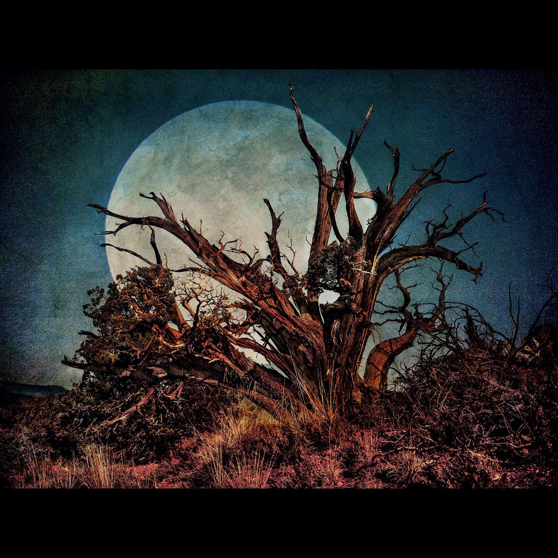 Juniper Moon by Bob Coates