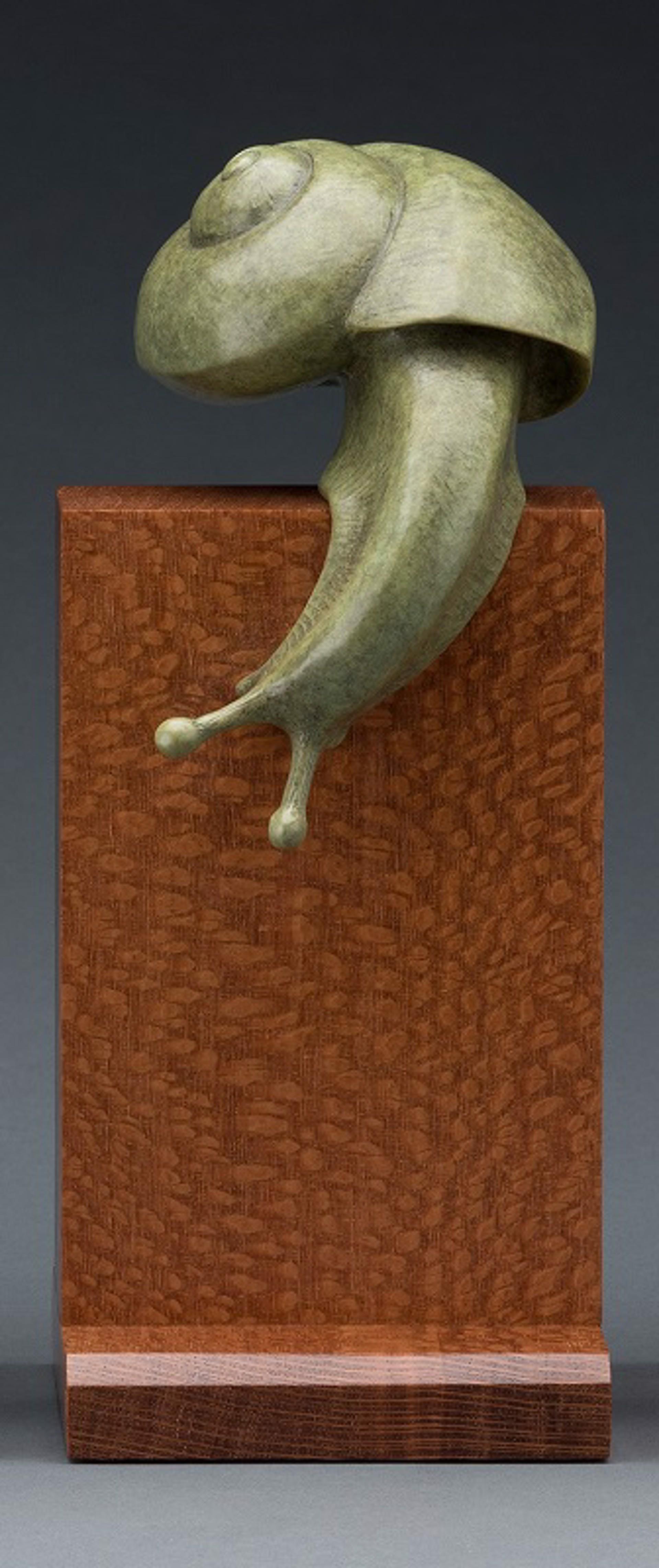 Snail by Tony Hochstetler