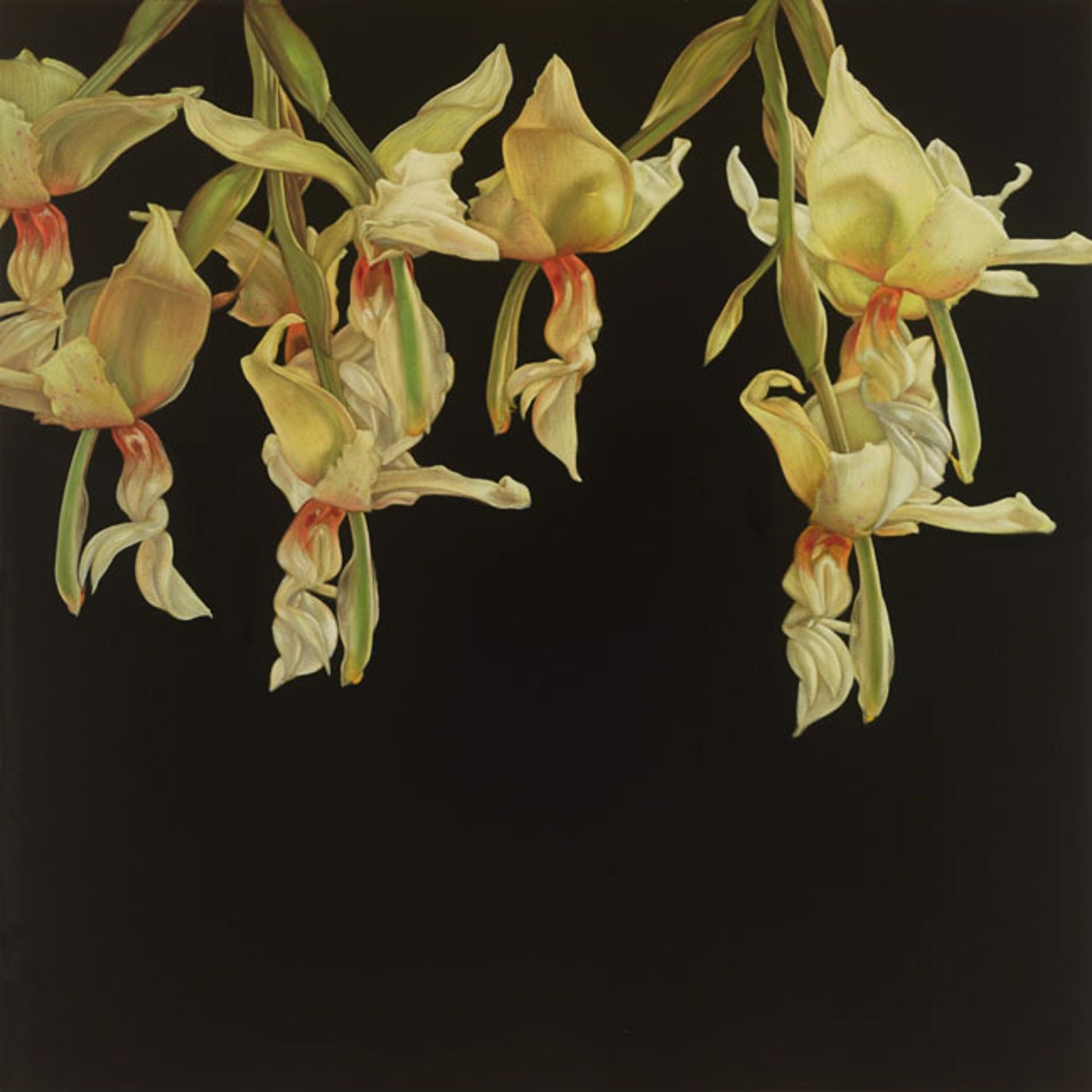 Orchids by Larissa Morais