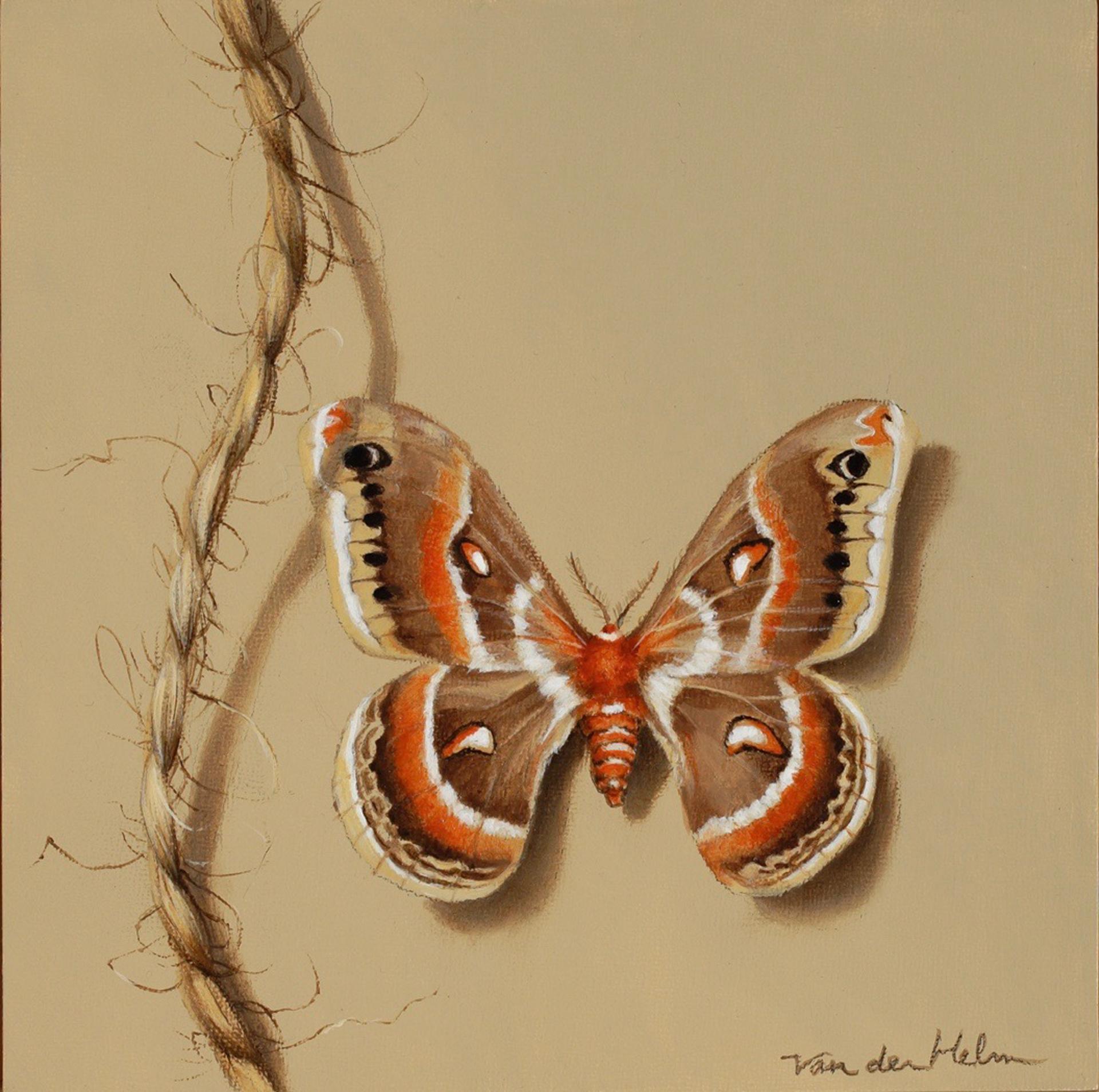 Cecropia Moth by Sarah van der Helm