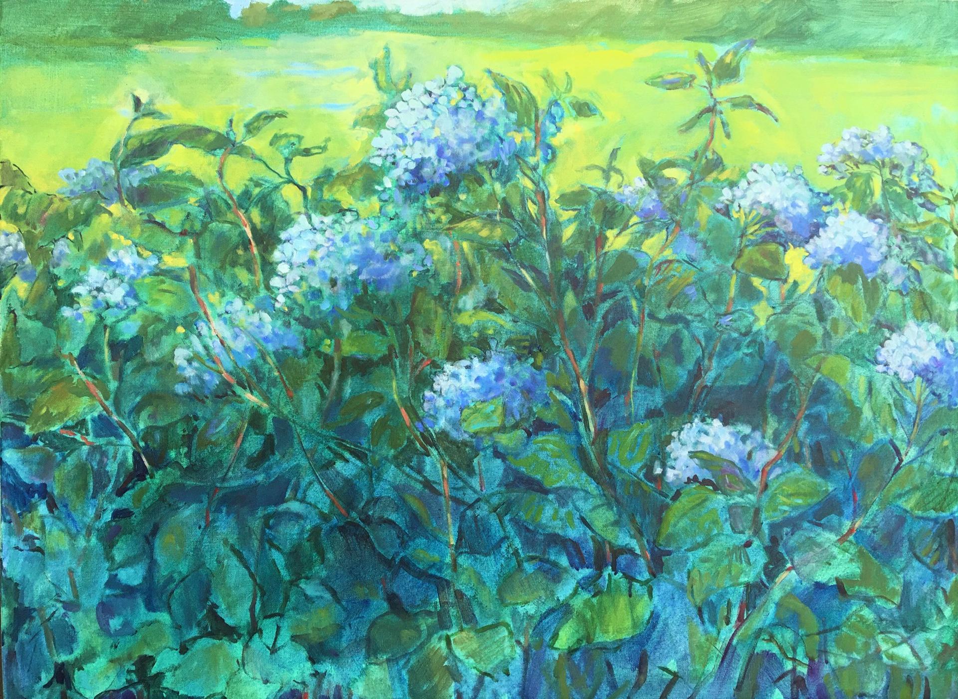 Hydrangea Garden by Nan Cunningham