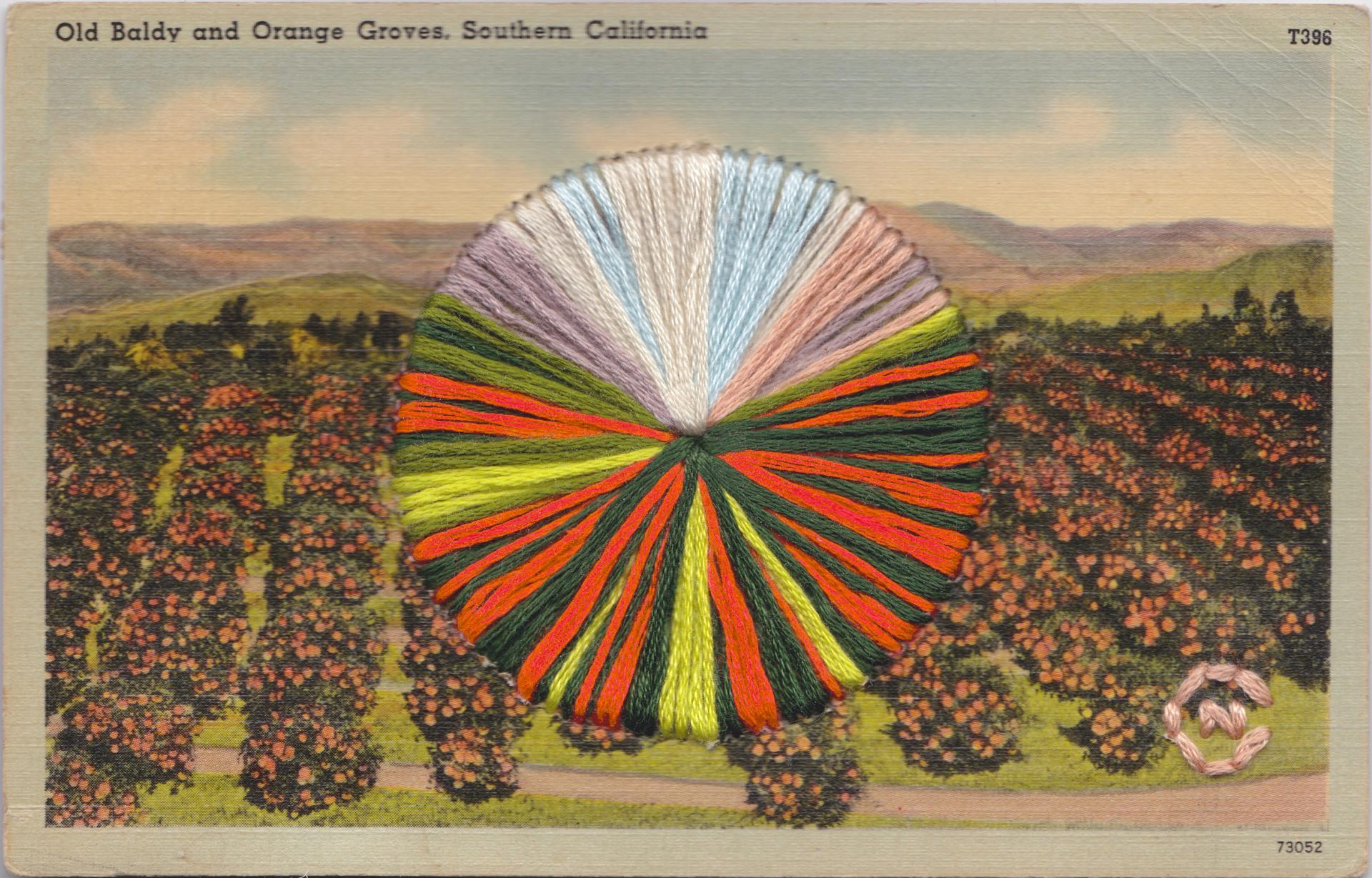 Orange Groves by Natalie Ciccoricco