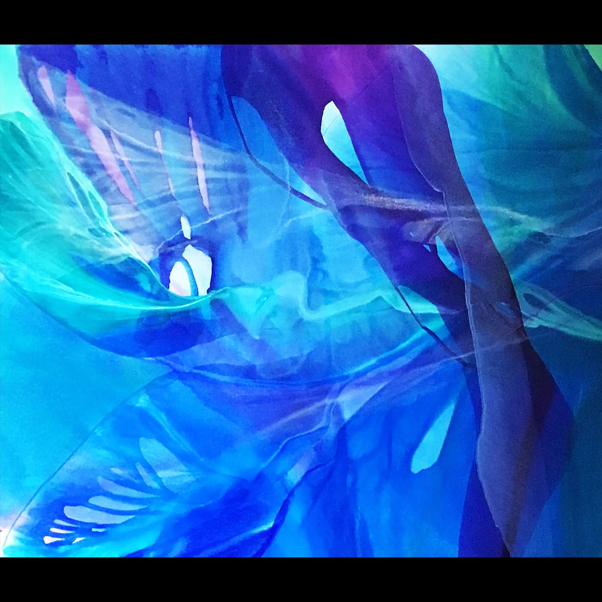 Ocean Butterfly by Jill Amundsen