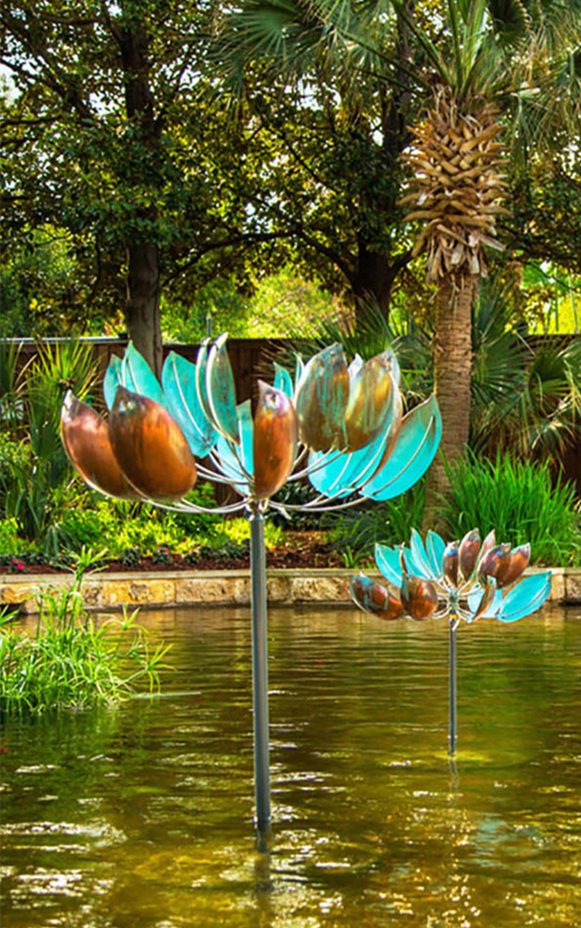 Lotus by Lyman Whitaker