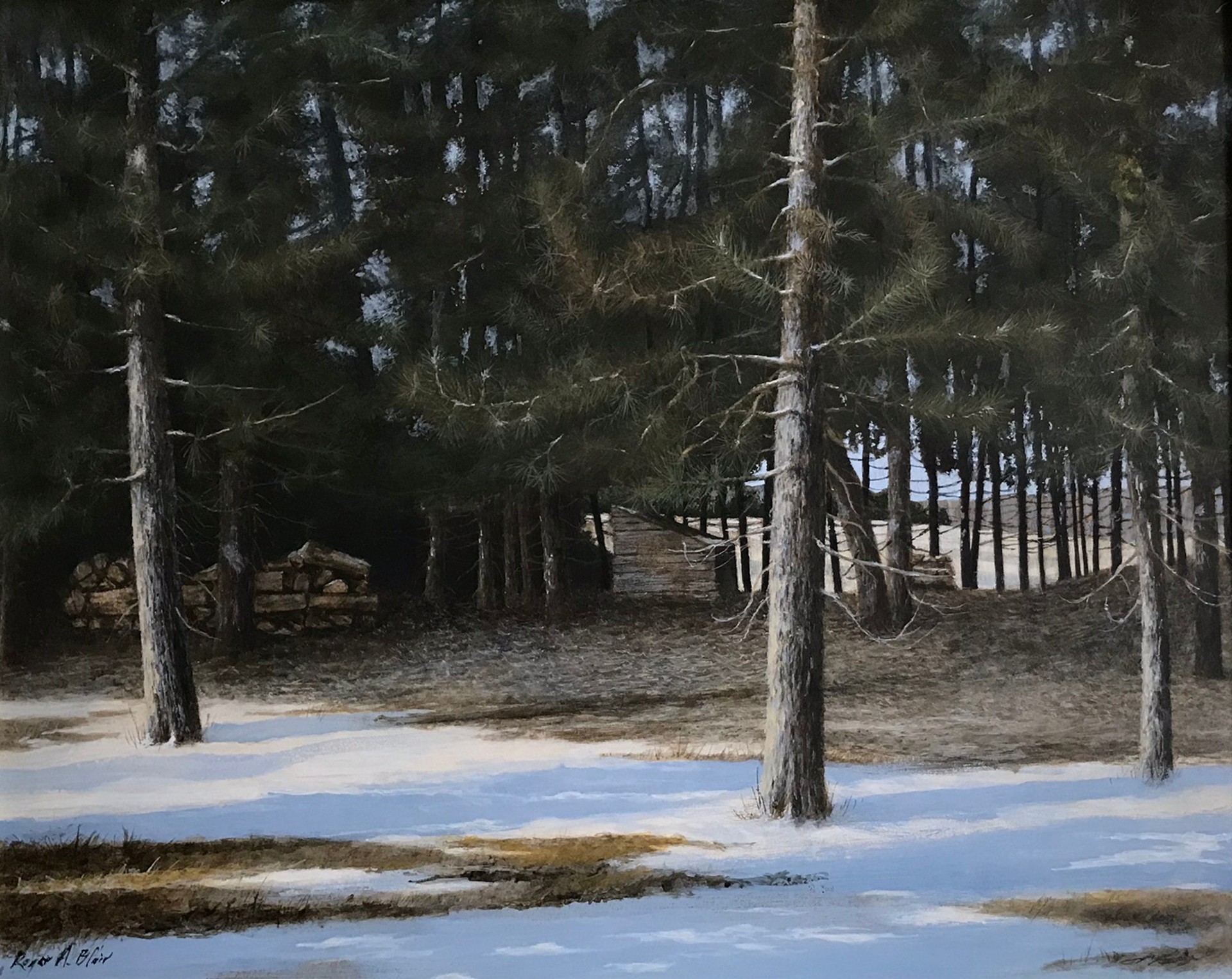 Eastern Pines by Roger Blair