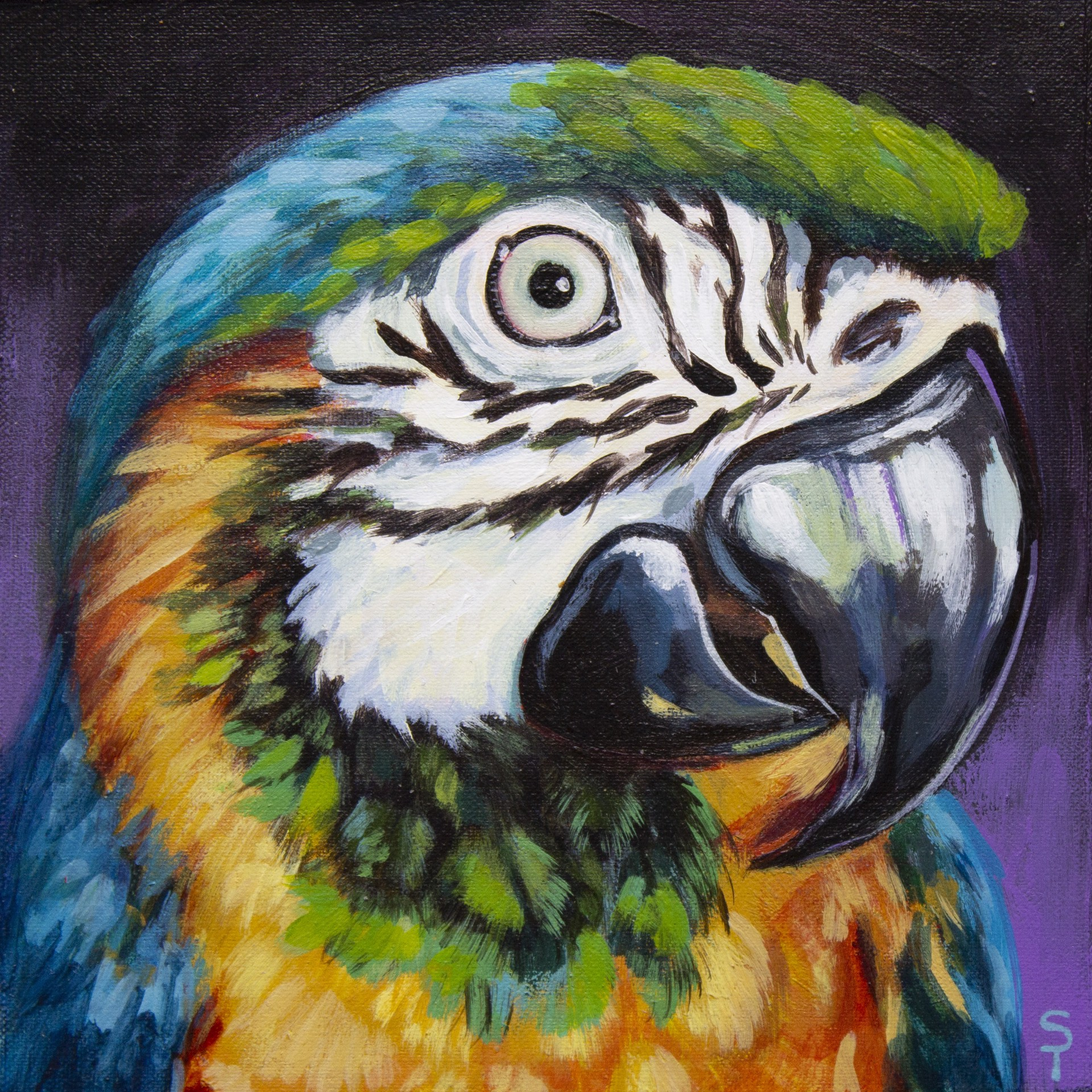 Blue Macaw by Sophy Tuttle