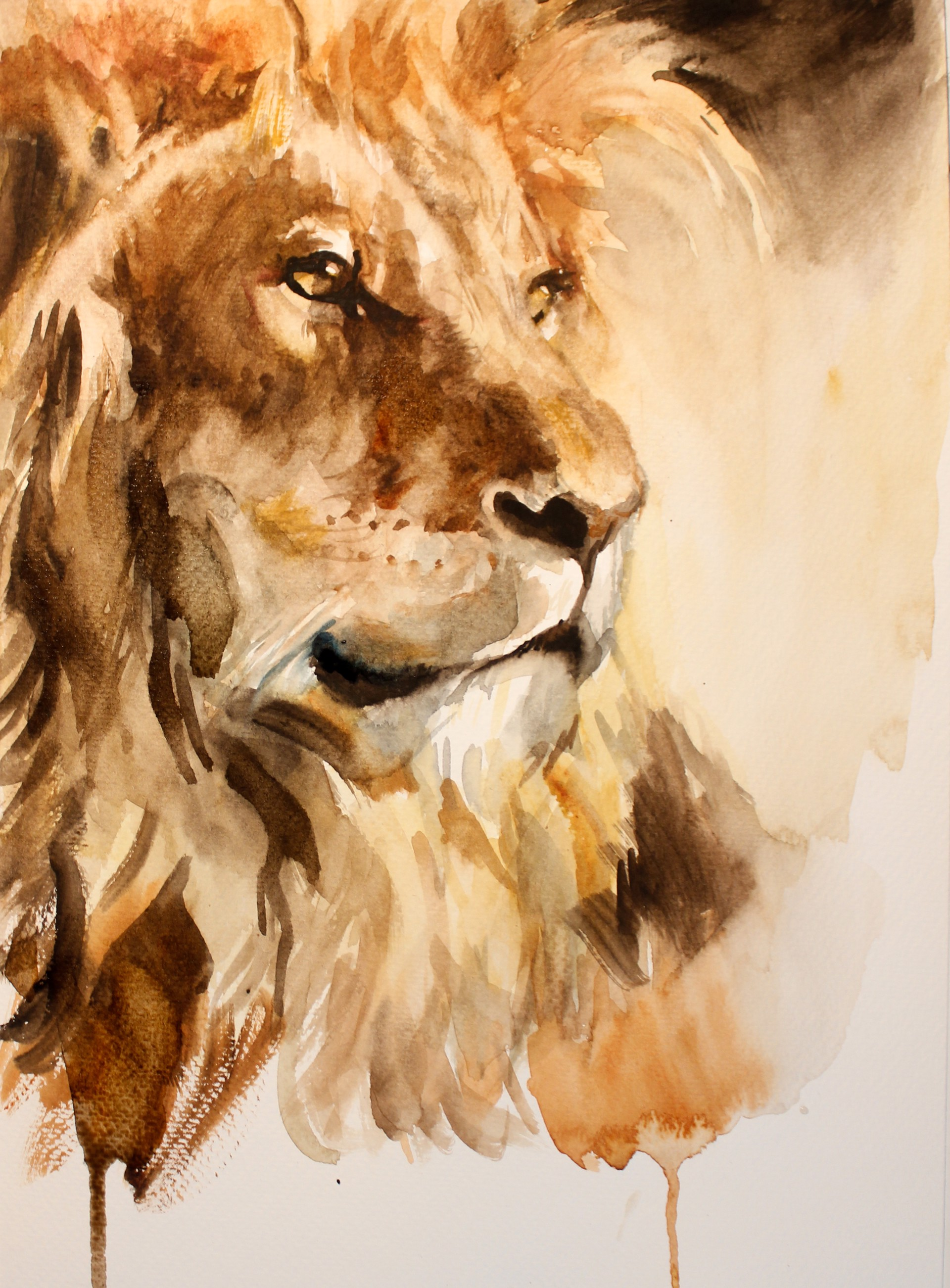 Lion by Michele Bajona